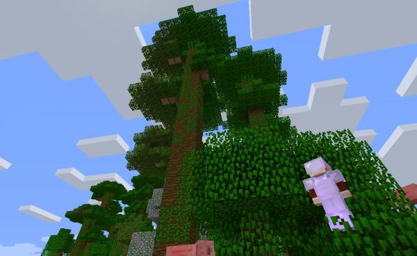 高いジャングルツリー